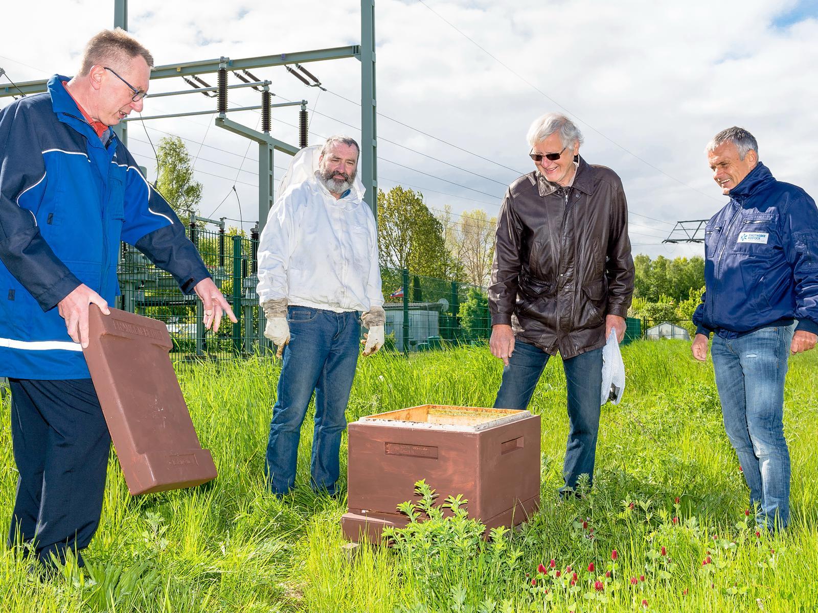 Unsere Netzgesellschafts-Mitarbeiter Torsten Wegener (l.) und Frank Knobloch (r.) mit den Imkern auf der Grasfläche am Umspannwerk Warnemünde. Foto: Margit Wild